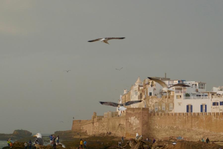 Visiter Essaouira