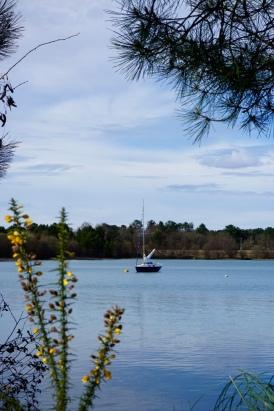 Lac d'Arjuzanx dans les Landes