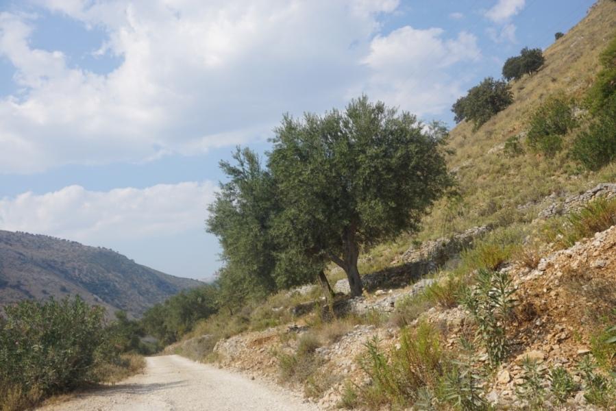 Conduire en Albanie